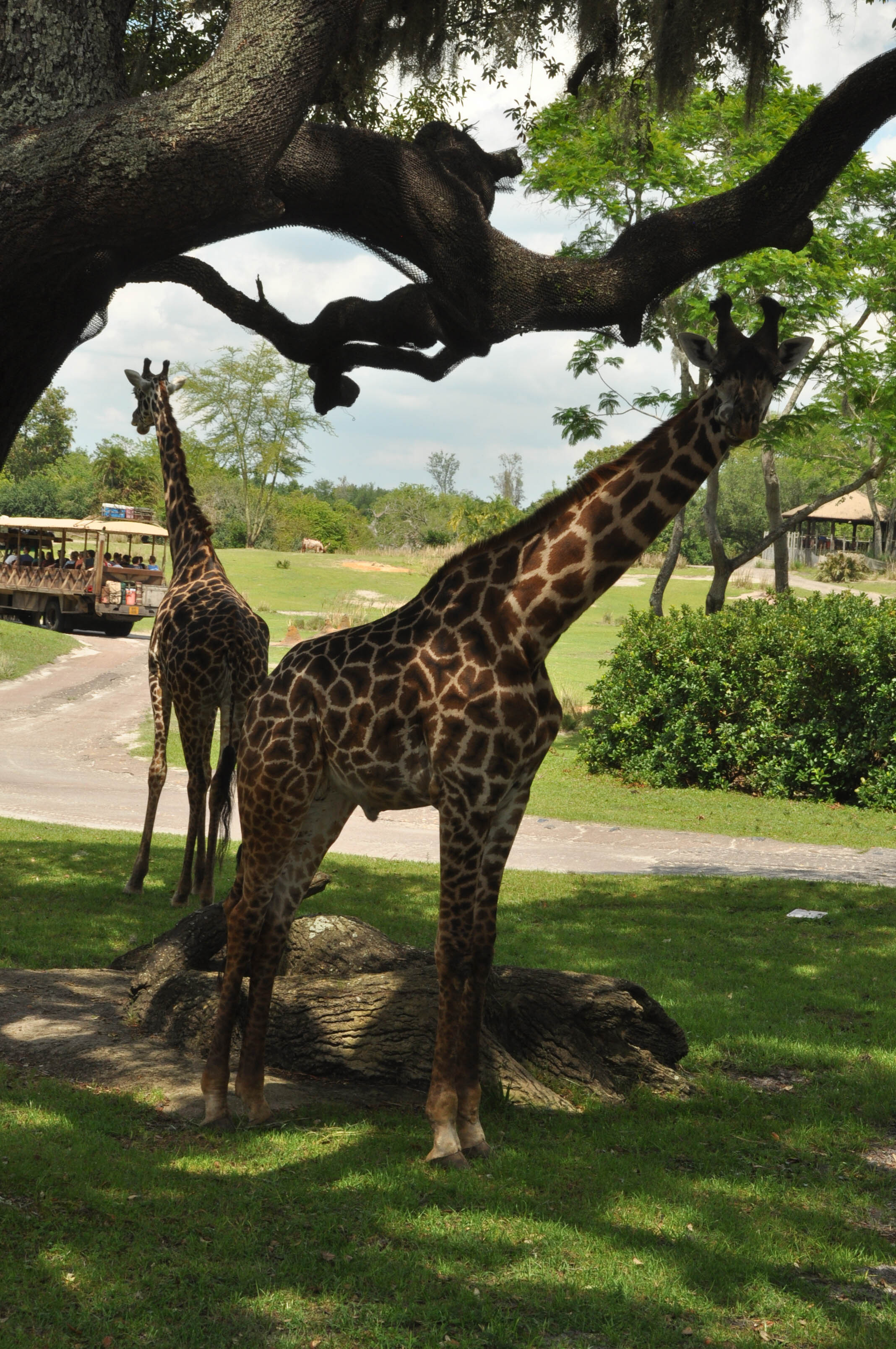 Wild Africa Trek-98.jpg