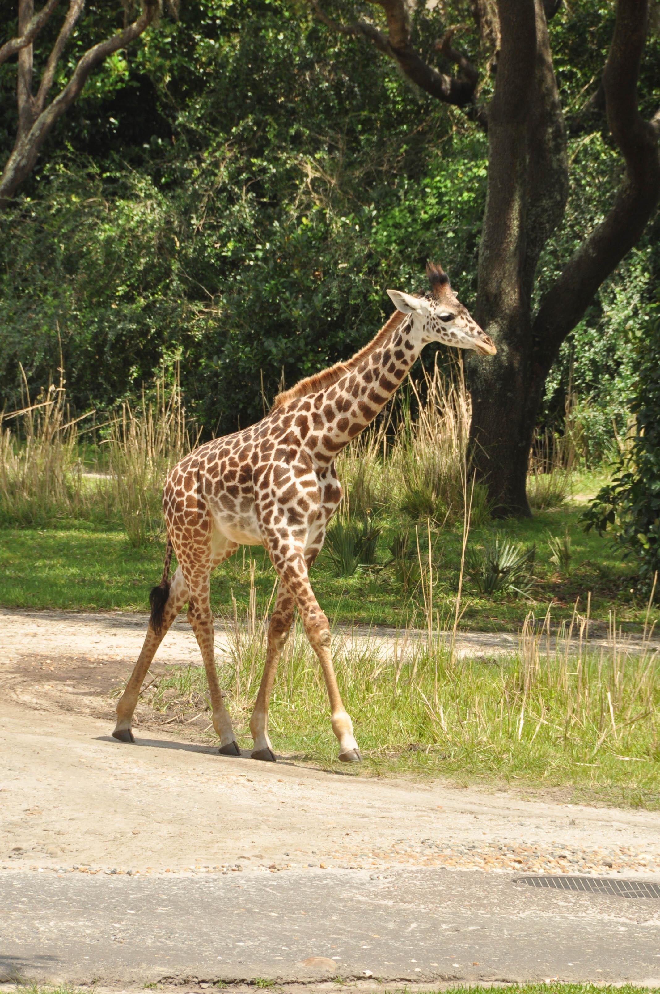 Wild Africa Trek-102.jpg