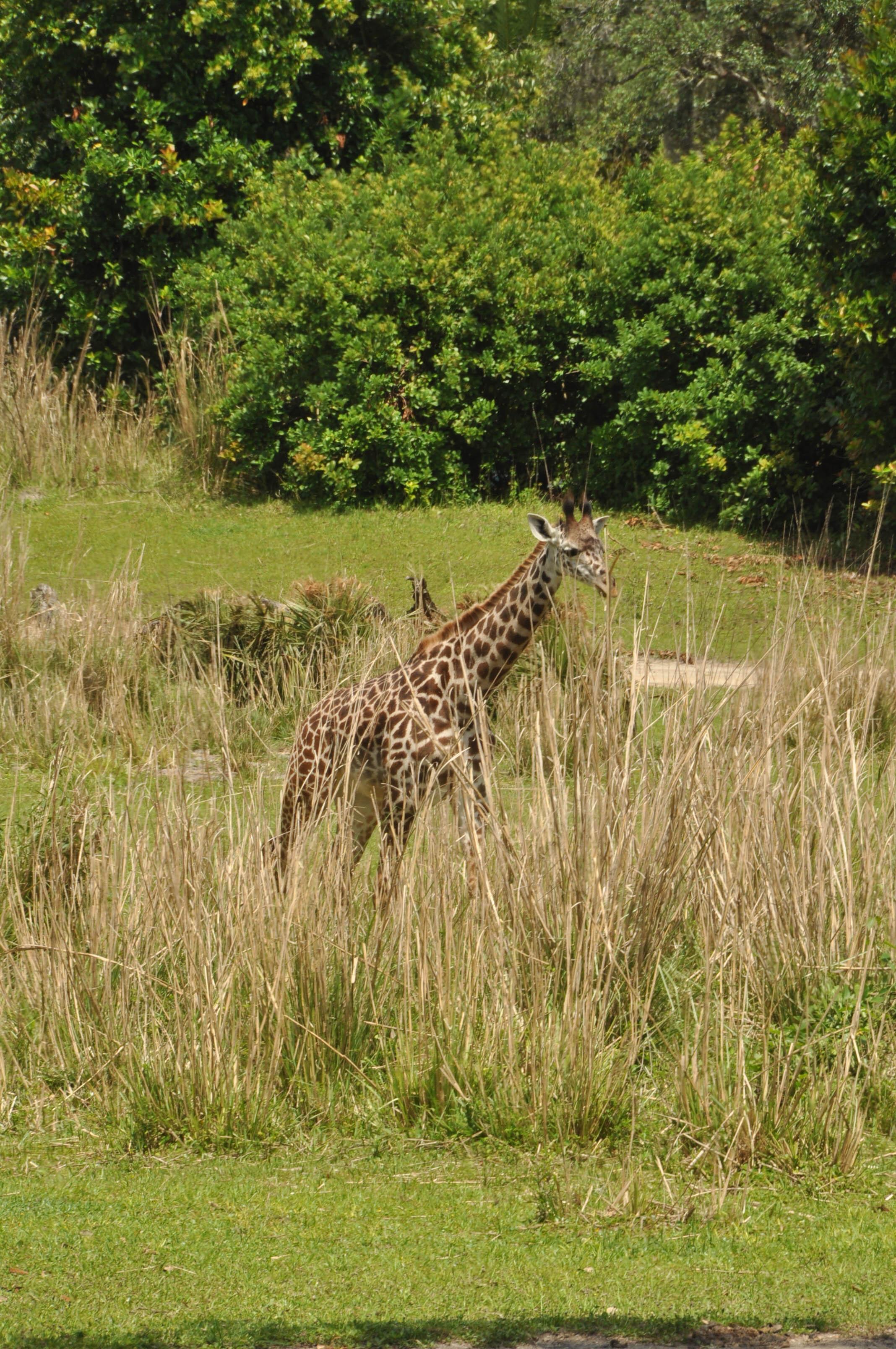 Wild Africa Trek-101.jpg