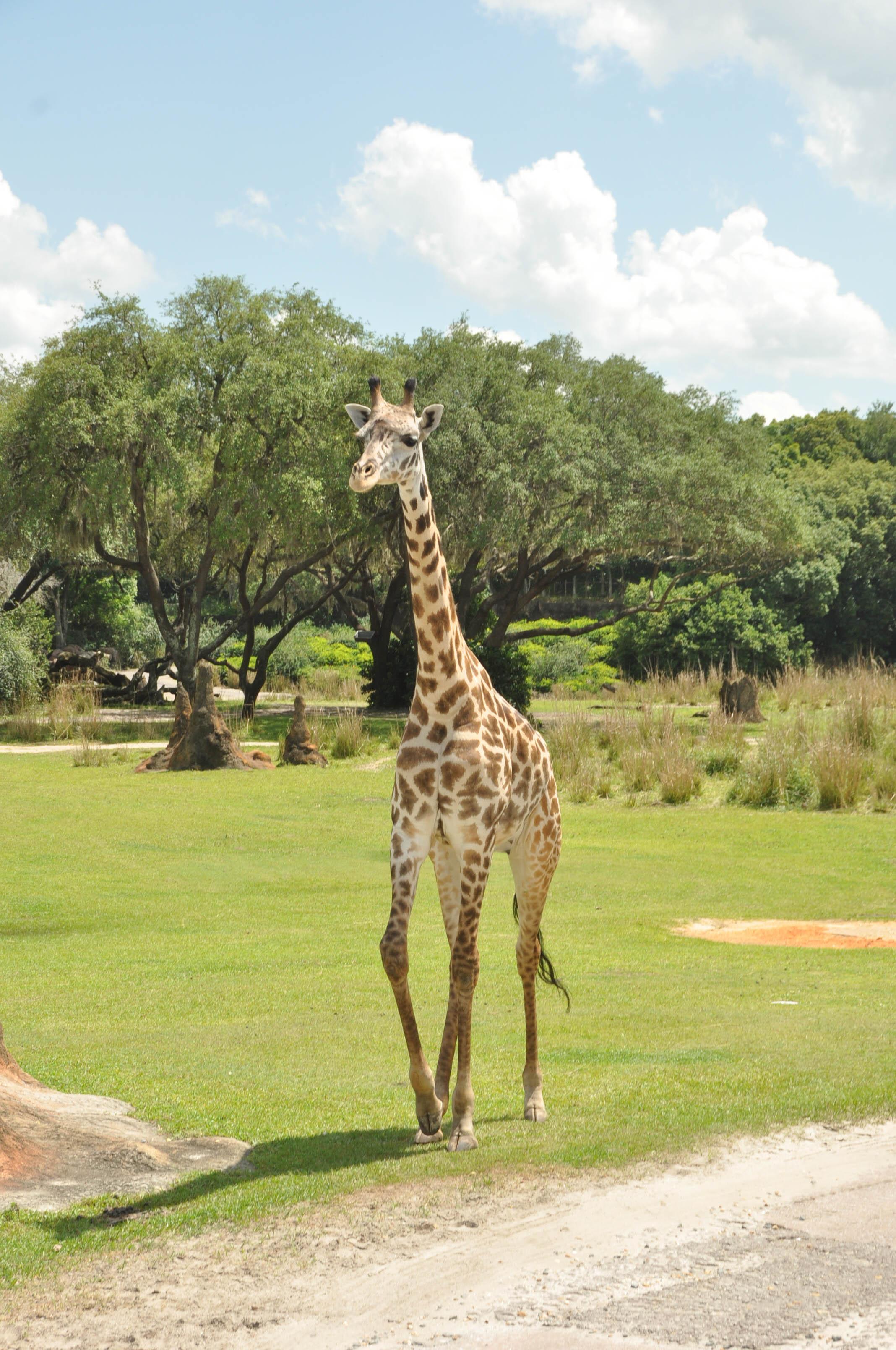 Wild Africa Trek-105.jpg