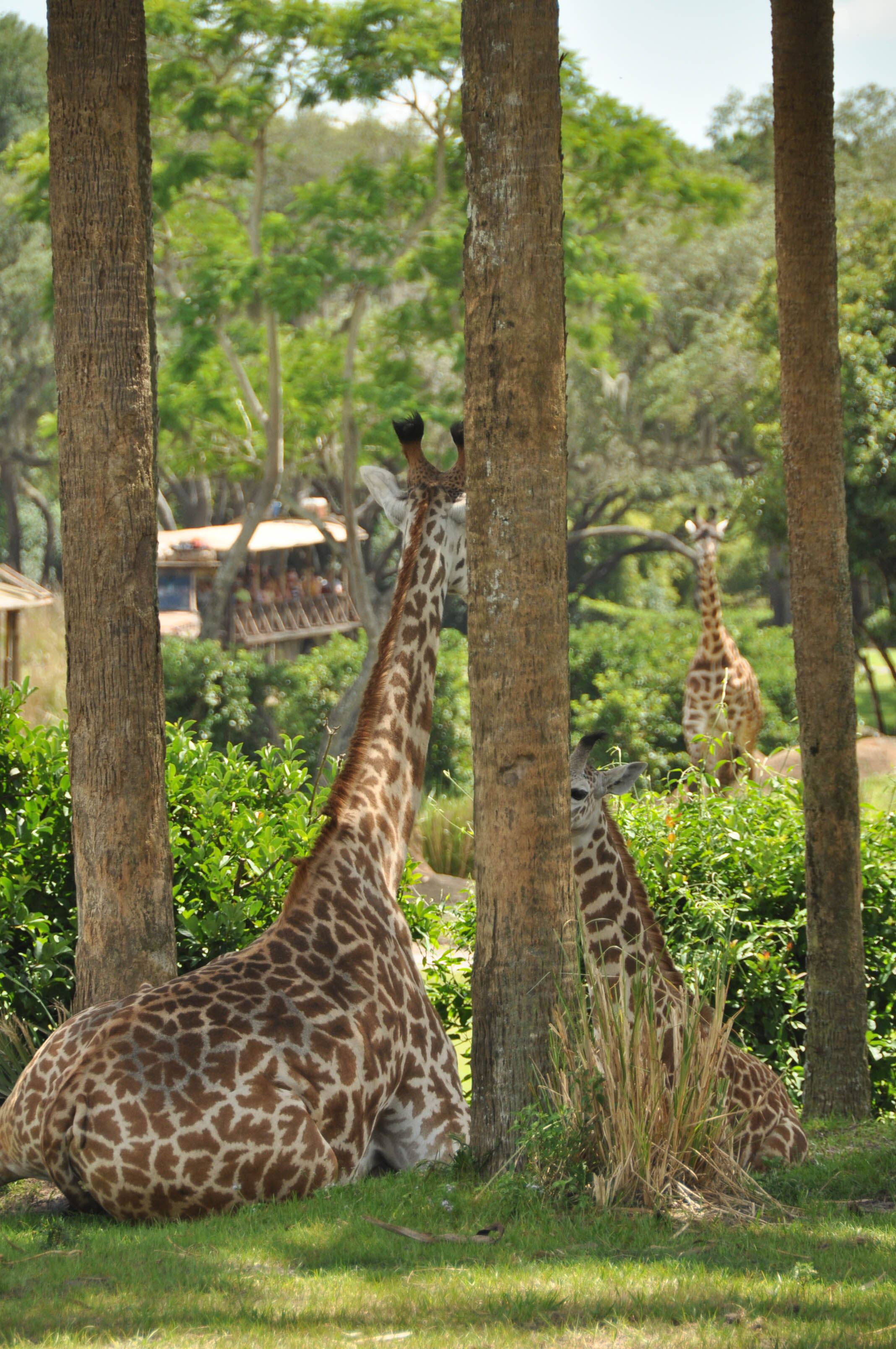 Wild Africa Trek-106.jpg