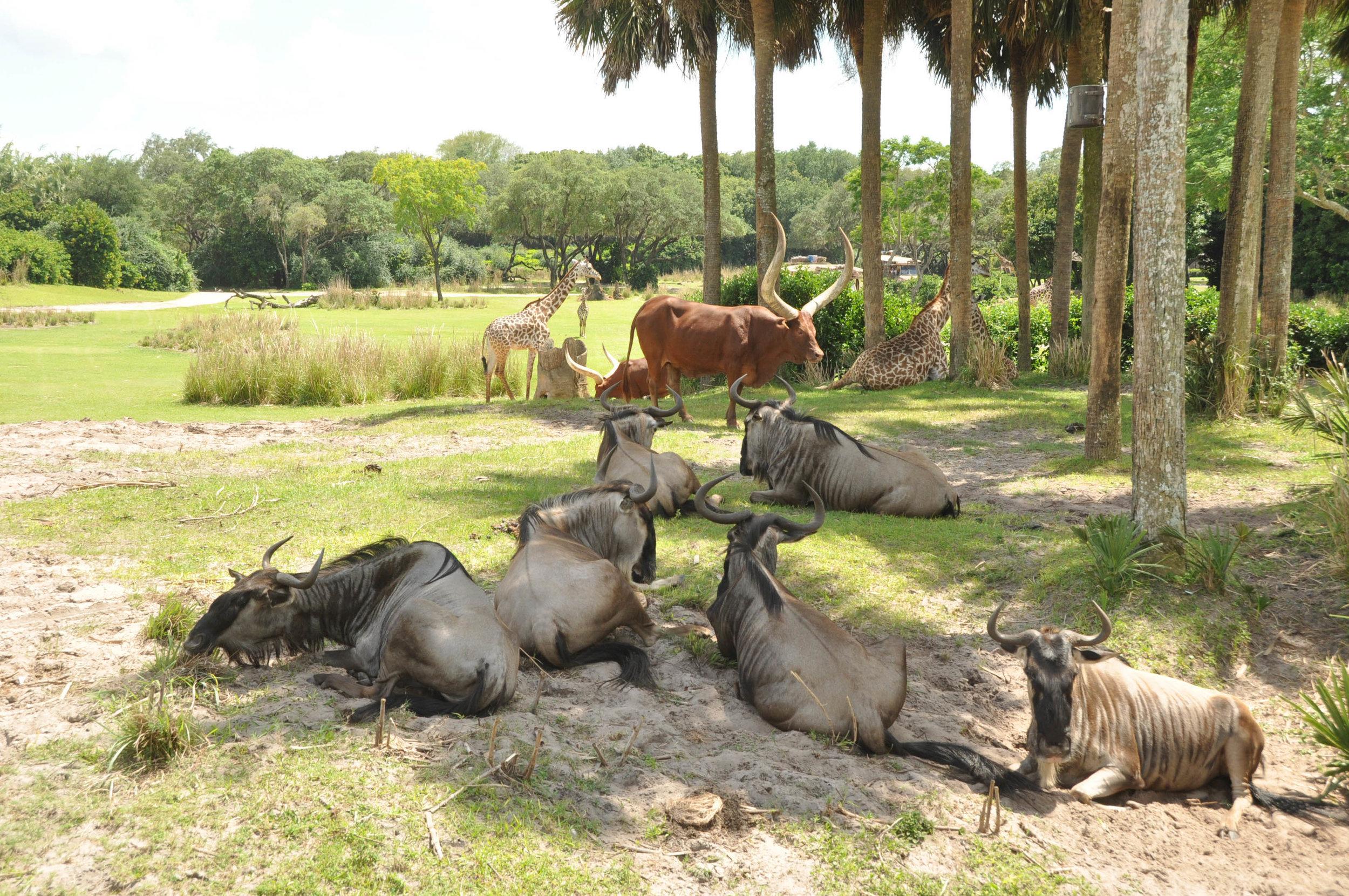 Wild Africa Trek-107.jpg