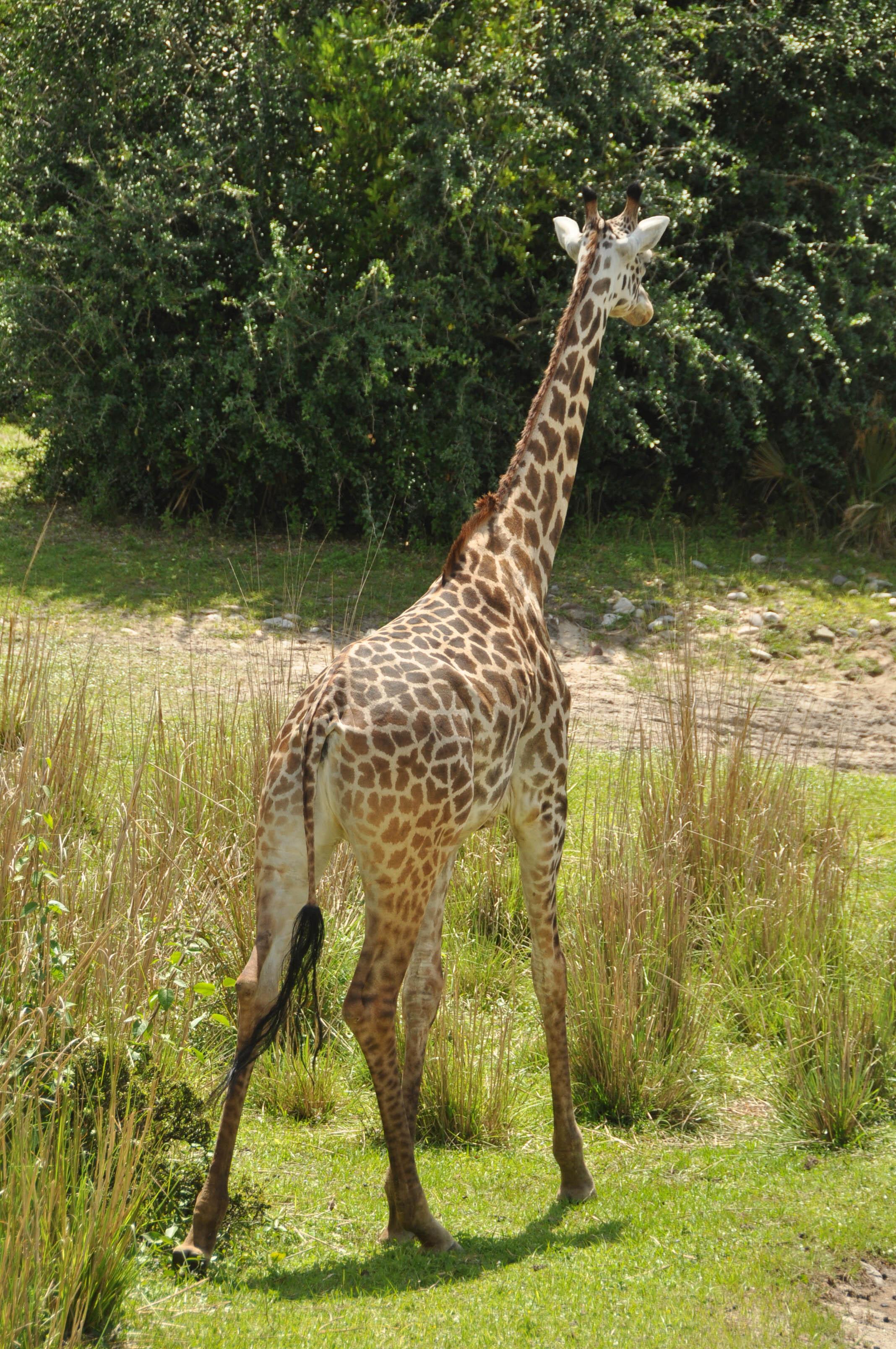 Wild Africa Trek-109.jpg