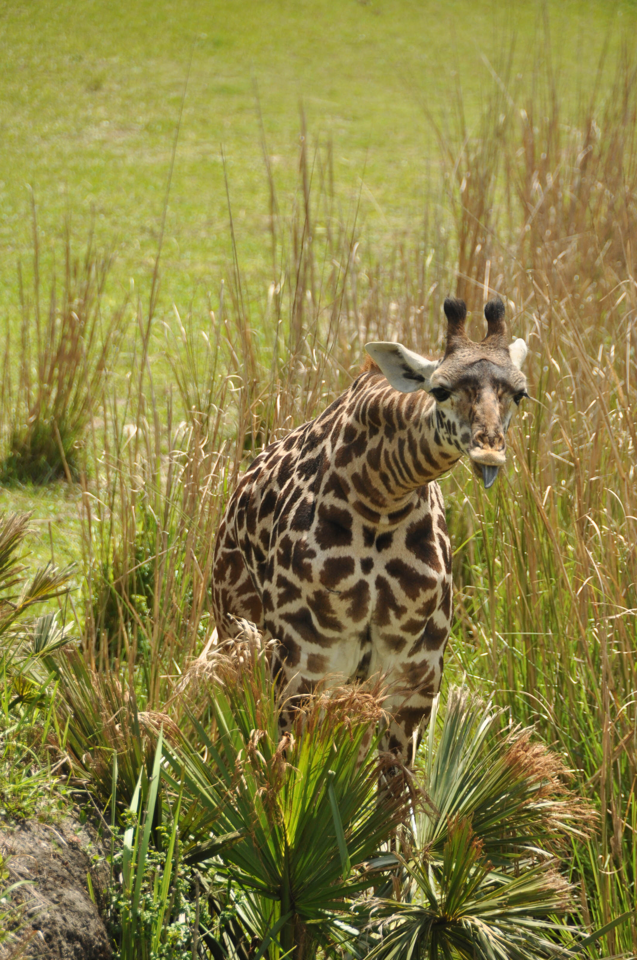 Wild Africa Trek-113.jpg