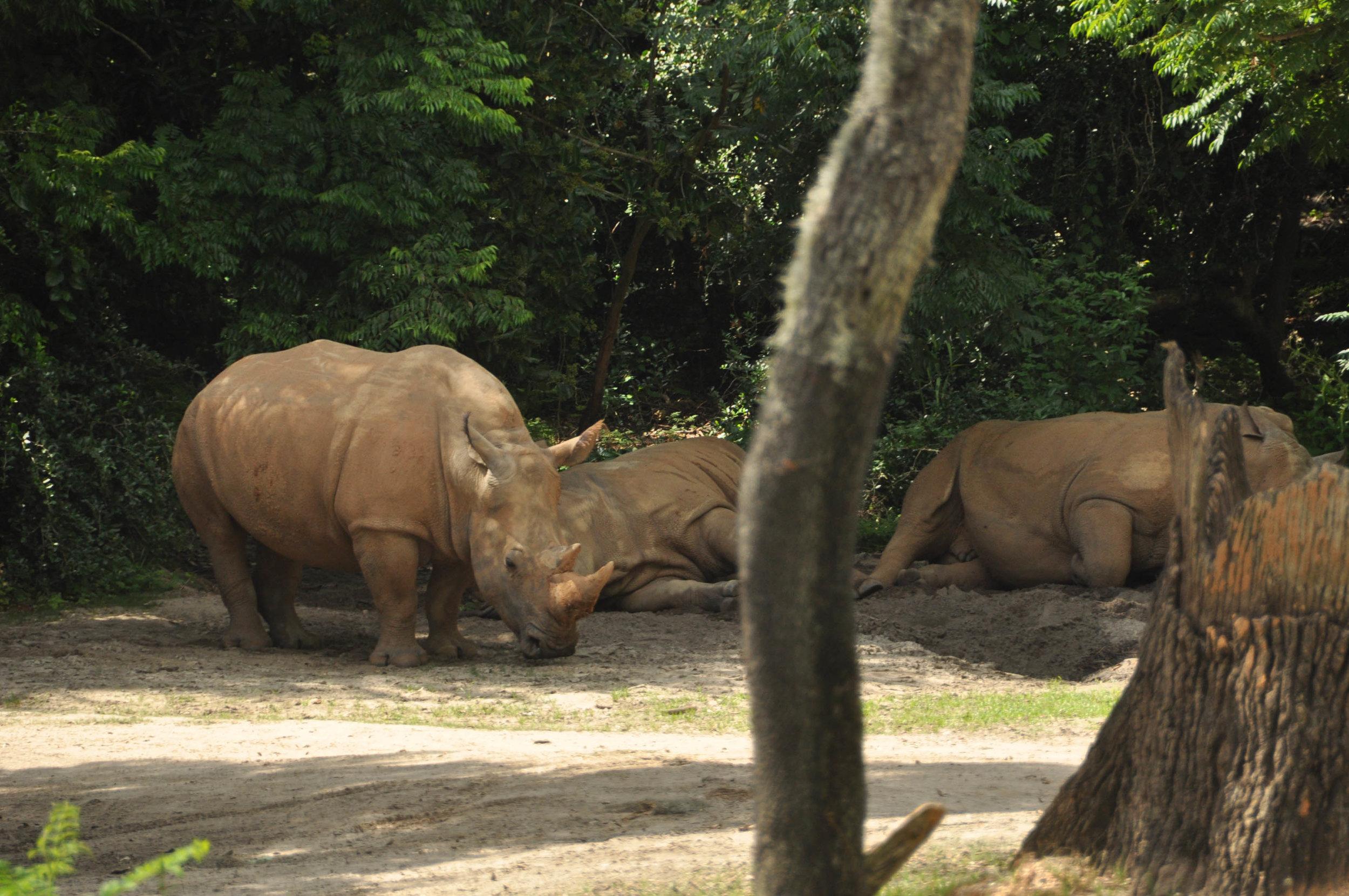 Wild Africa Trek-157.jpg