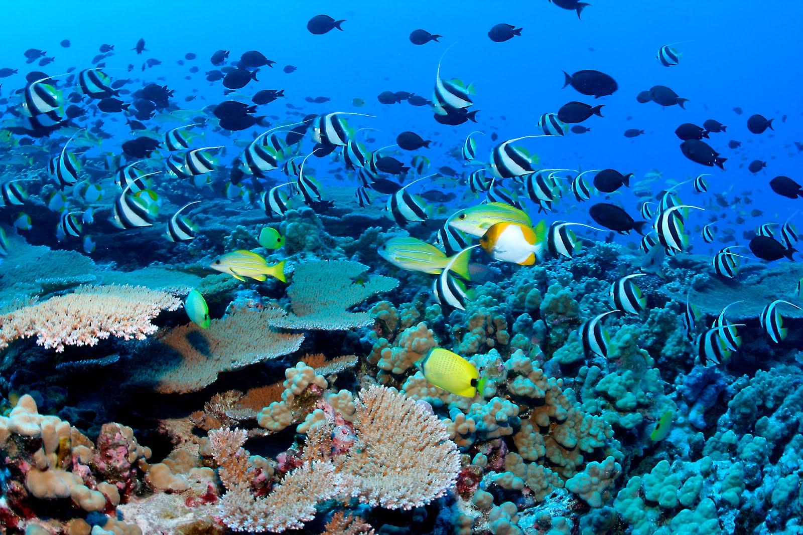 snorkeling-on-coral-reef.jpg