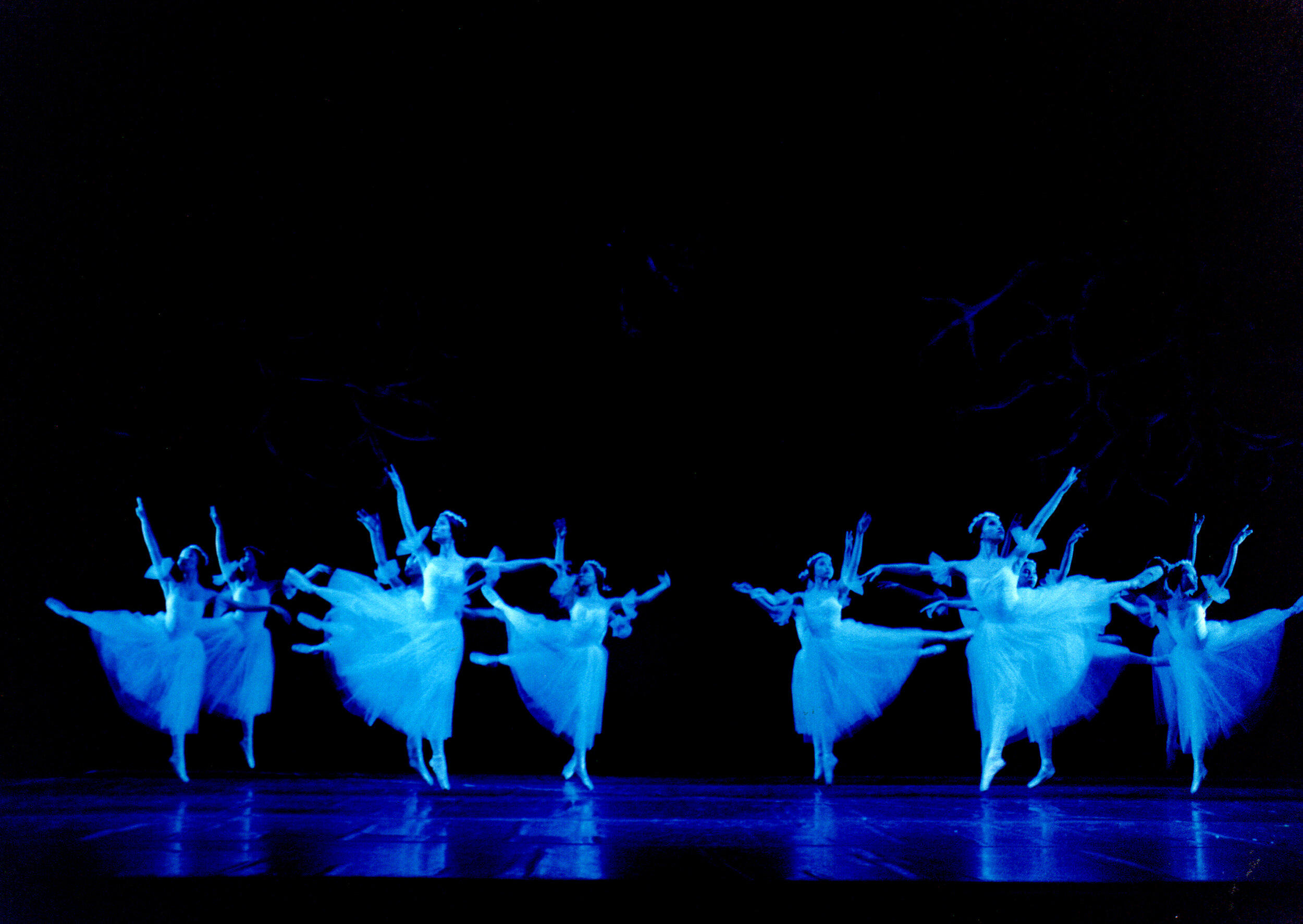 "The wilis of the 1999 staging of ""Giselle"""