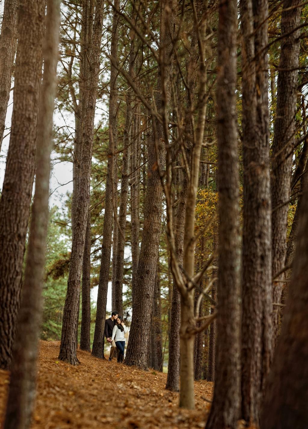 Trees Pano copy.jpg