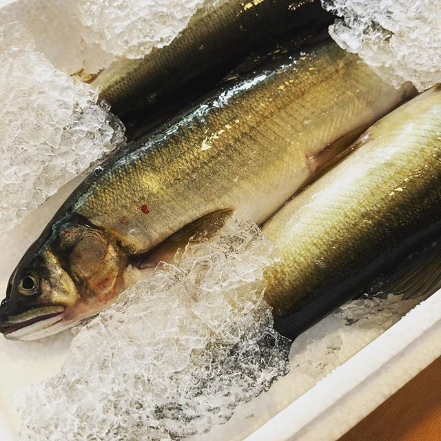 Ayu from Aichi prefecture, they are truly incredible after grilling, limited portion only.  #ato #nyc #new york #soho #nyceats #japanese #omakase #ayu #sweetfish #smelt #bestofnyc #sushi #sashimi