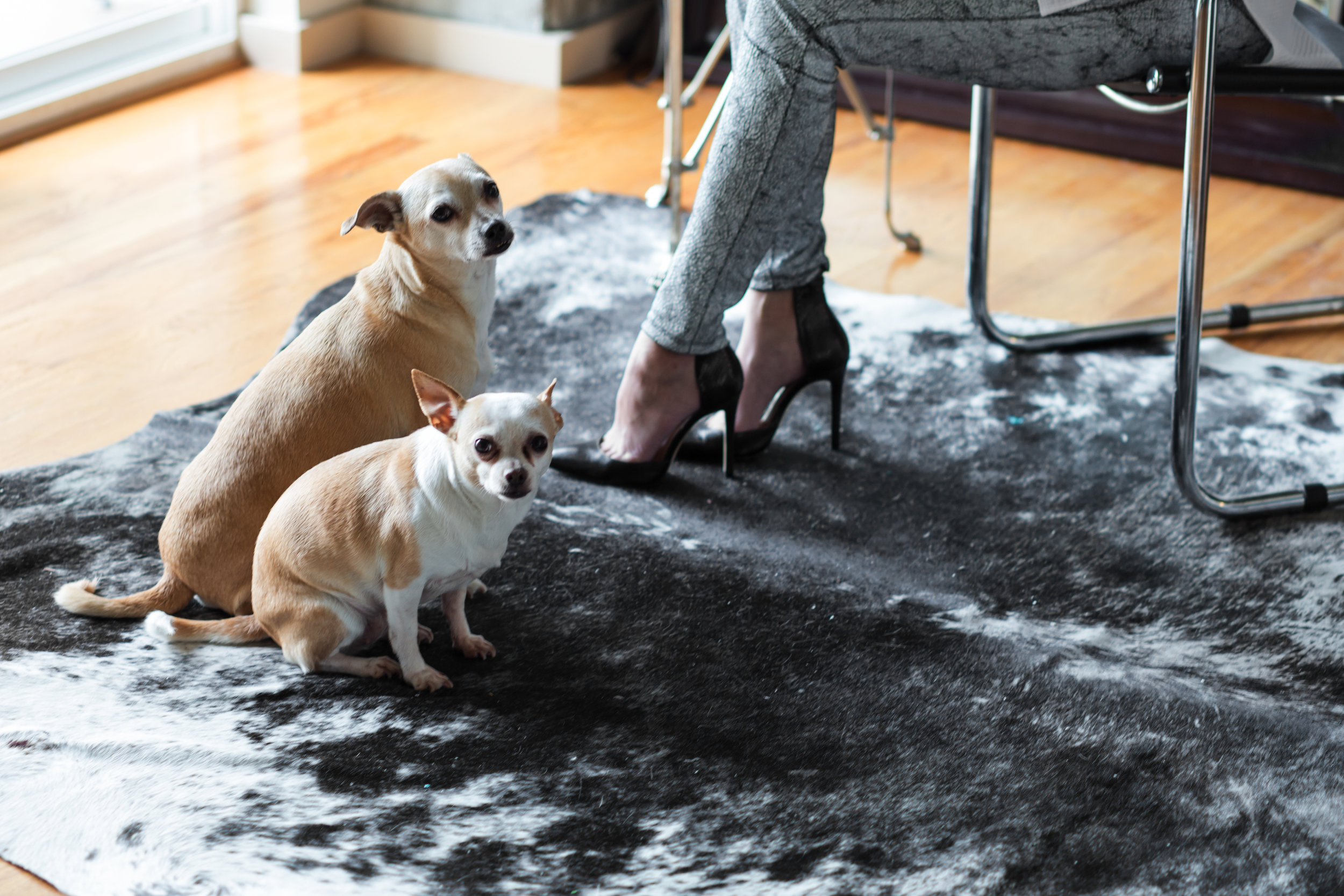 Fur babies and 'Choos Image by Sarah Ford