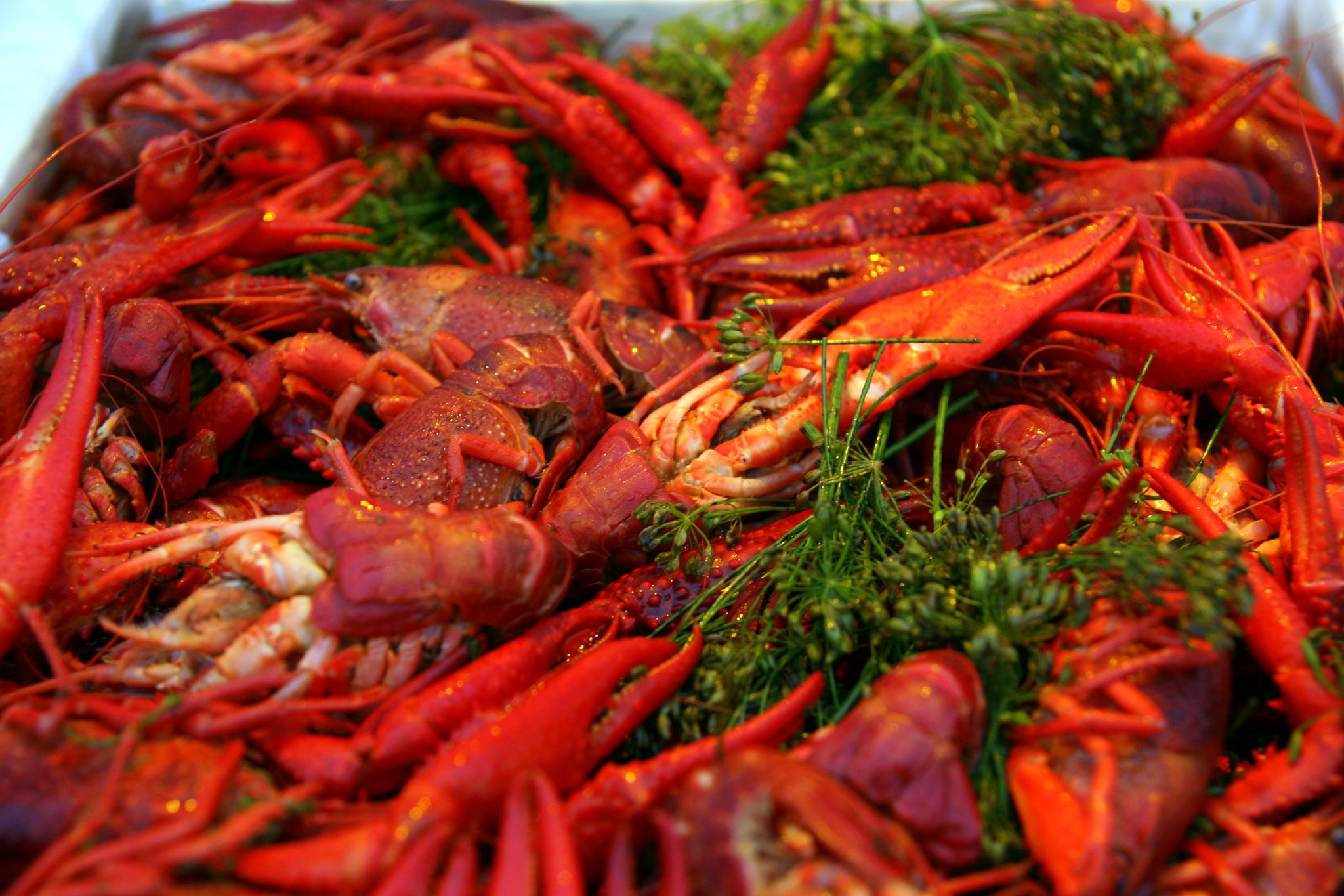 Cooked_crayfish_with_dill.jpg