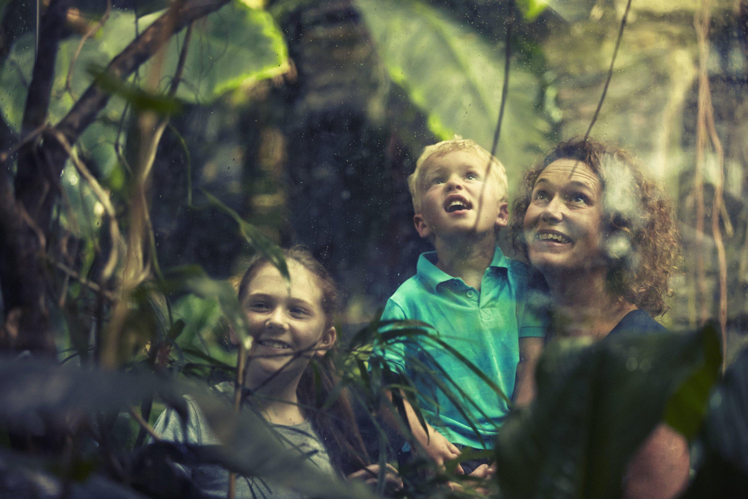 Universeum rainforest (Image credit: Kim Svensson/Göteborg & Co)