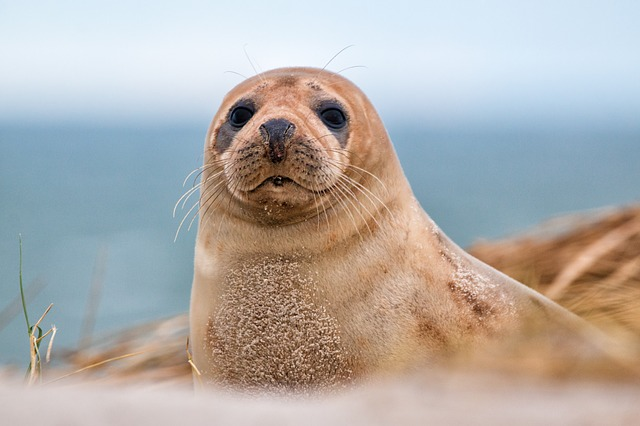 Enjoy a boat trip to the islands and watch seals