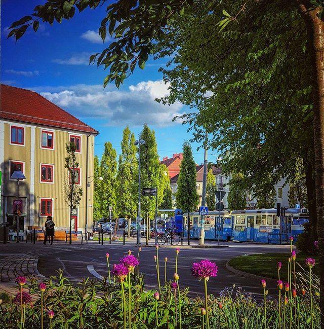Marvelous Mariaplan 📷 by @m_g_gbg #spring #majorna #gothenburg #flowers #thisisgbg #thisisgburg #tram #göteborg #sweden #sverige #visitsweden