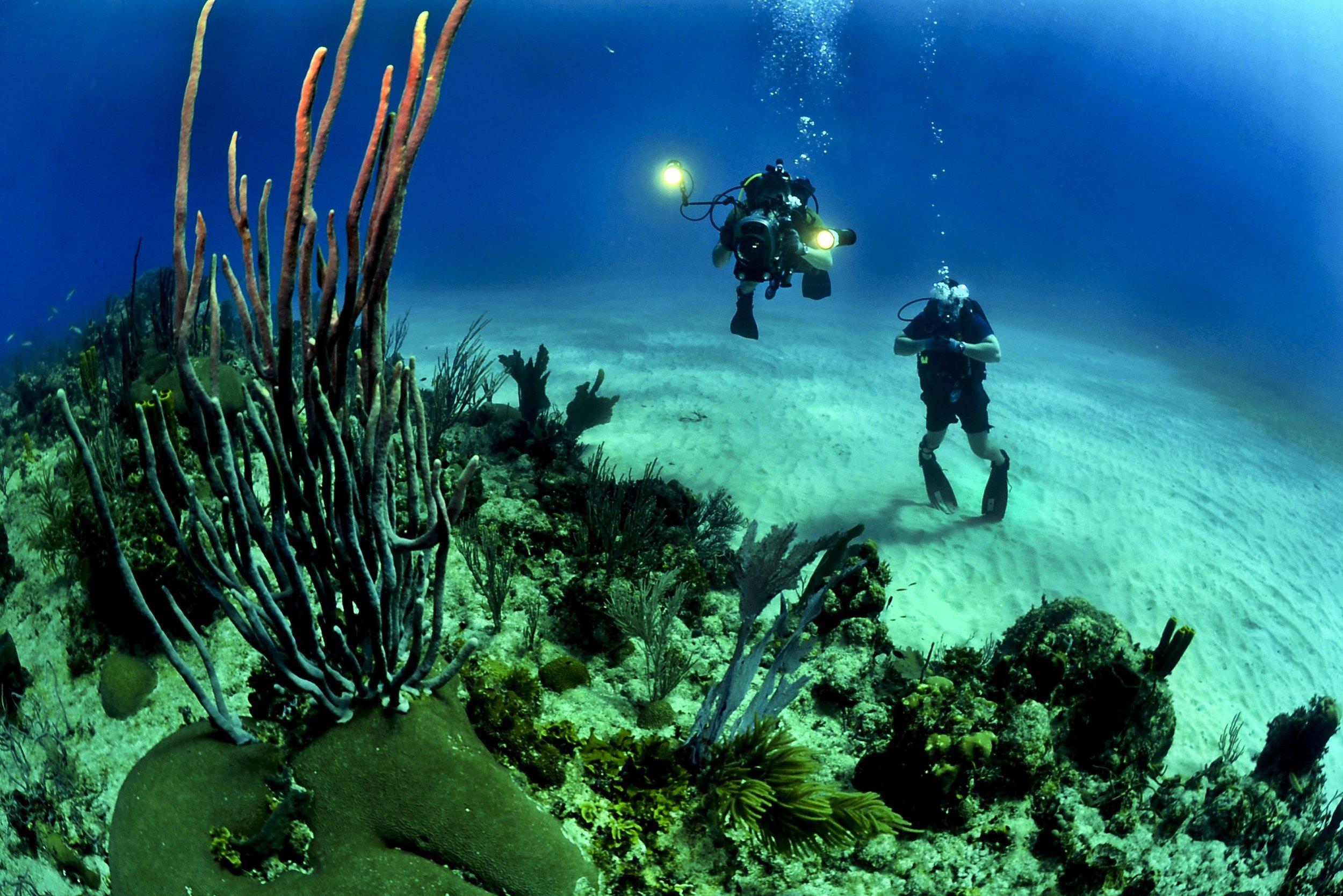 corals-divers-diving-37542.jpg
