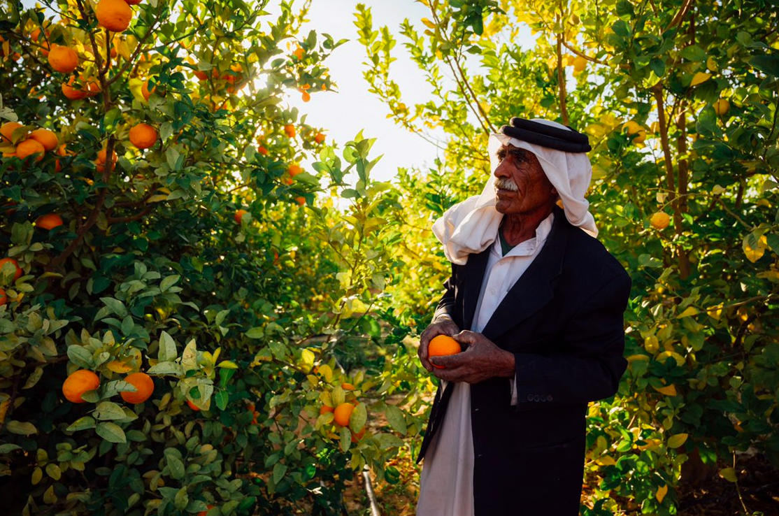 Orchard farmer in Jordan