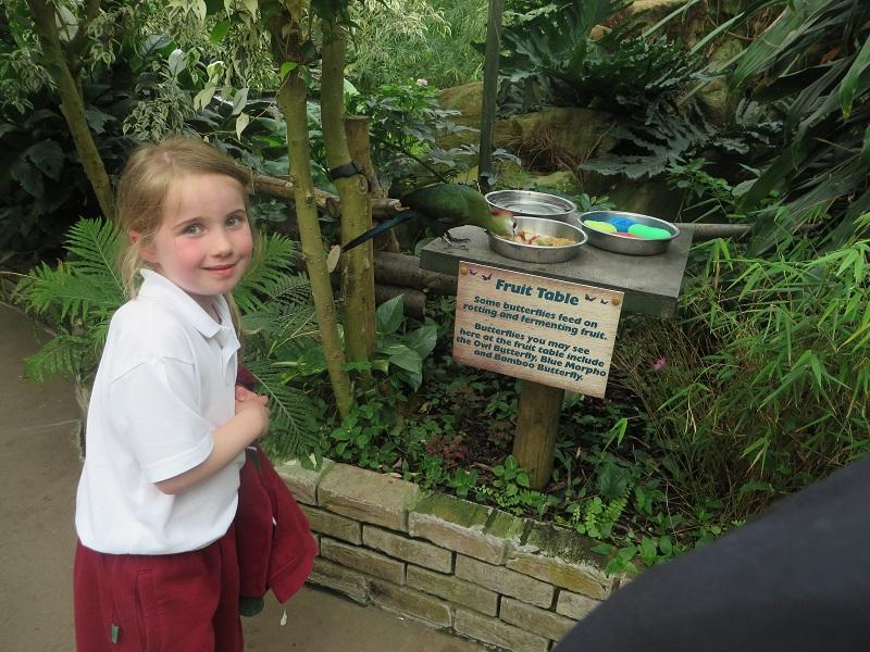 reception-visit-tropical-wings-13.jpg