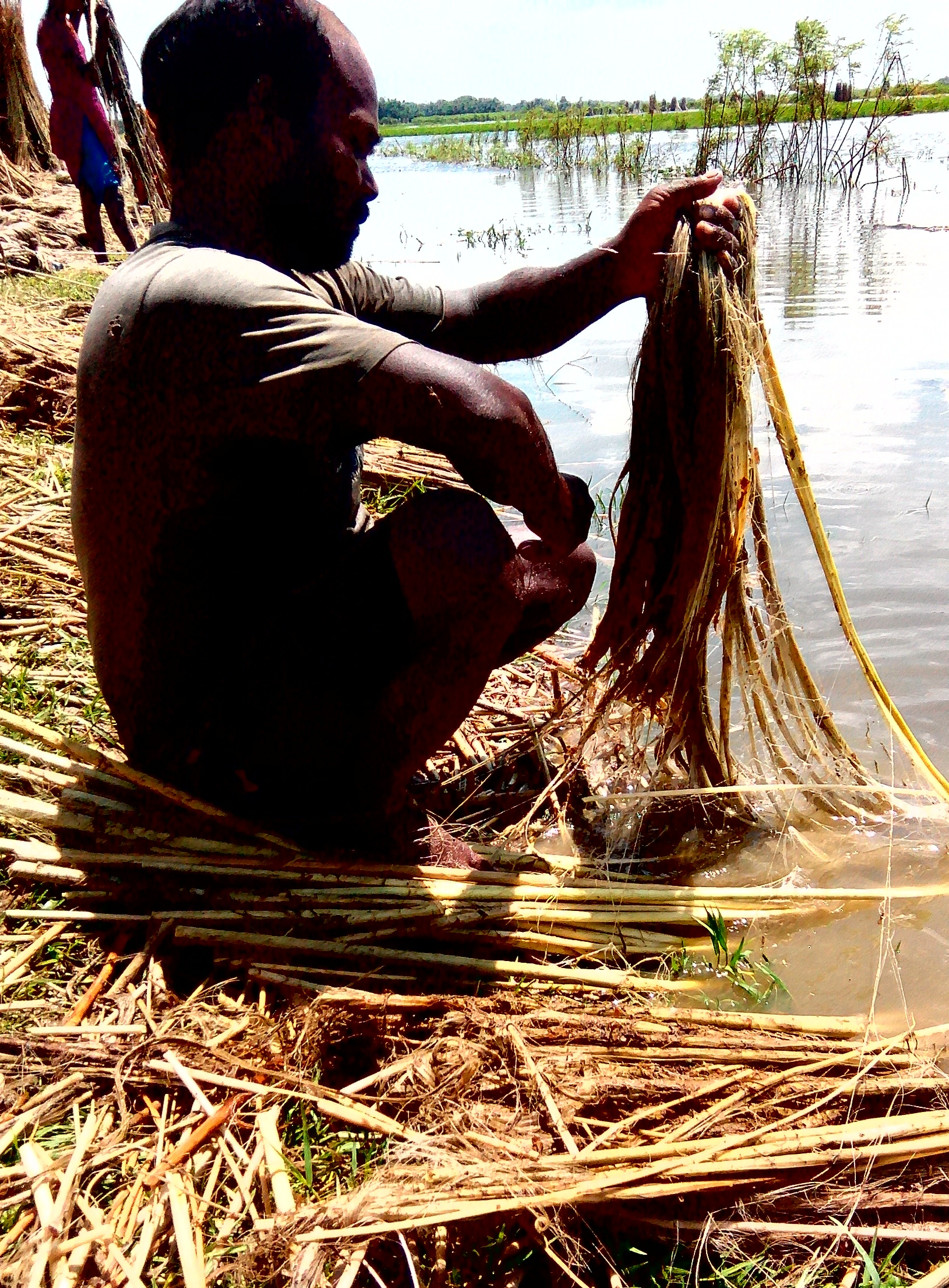 A farmer harvests jute in a village. Credit: Zaheeb Ajmal