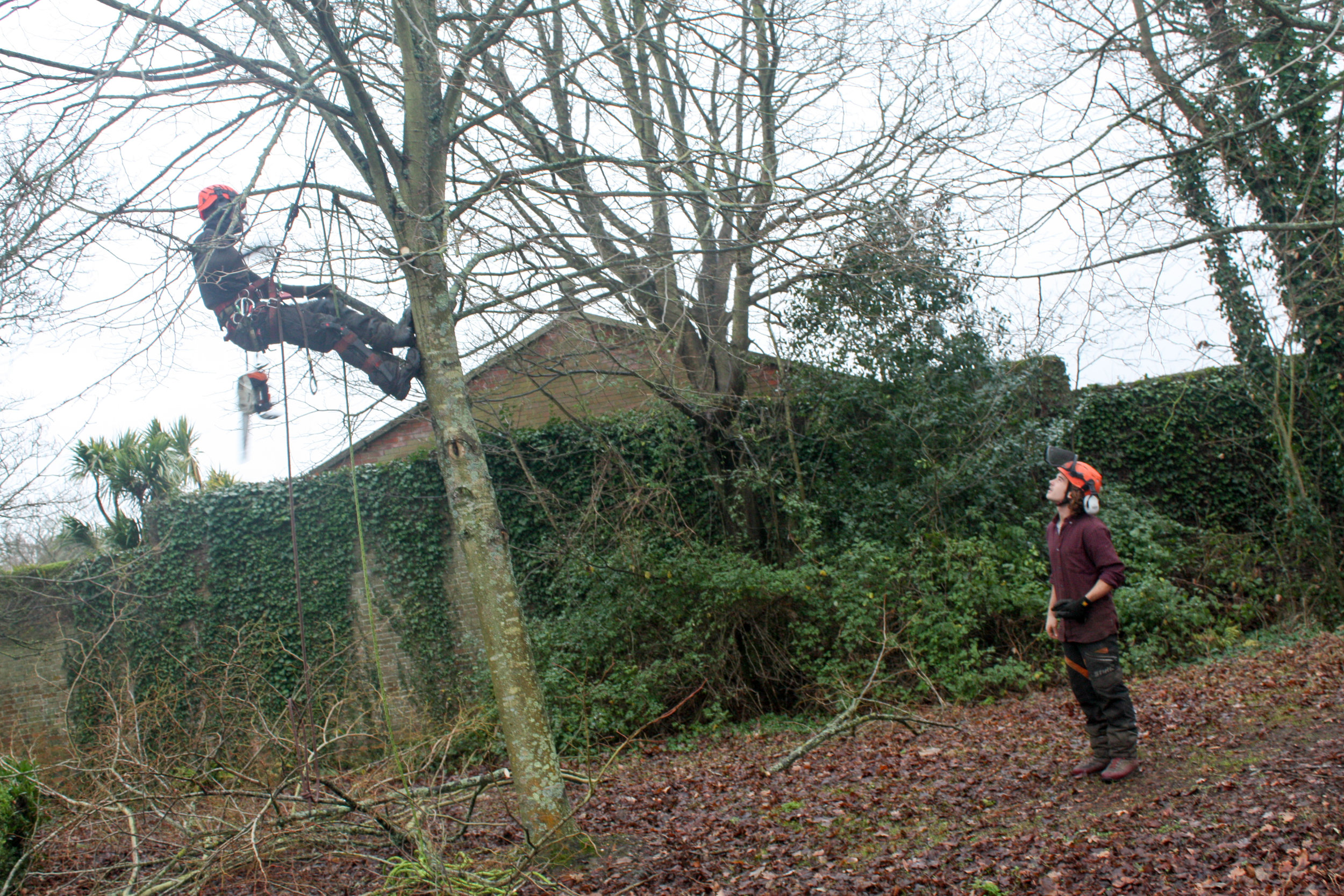 Taylors Tree Services