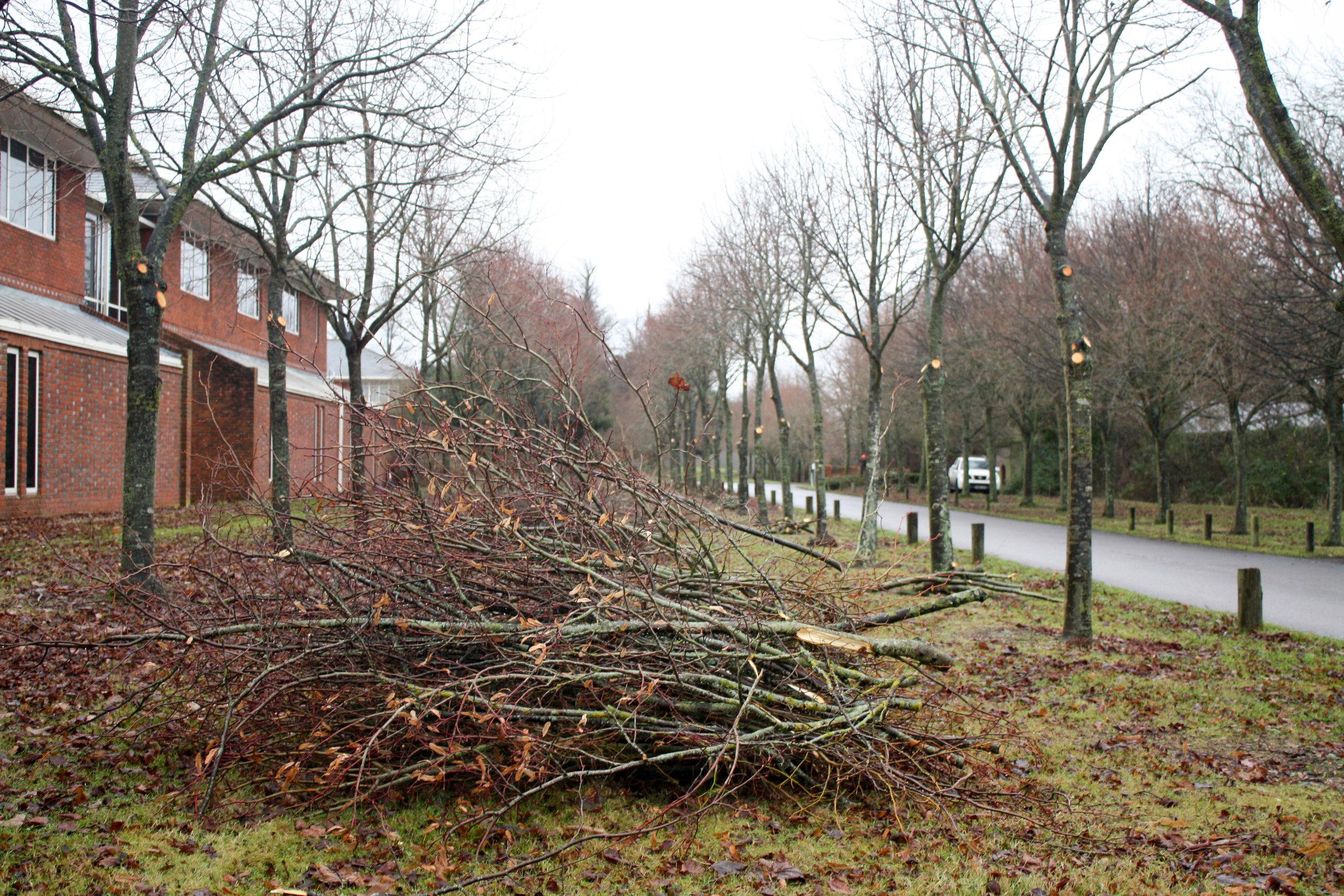 Taylors Tree Services FAQ