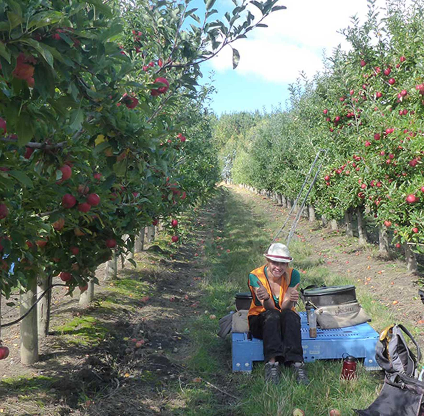Working the orchards