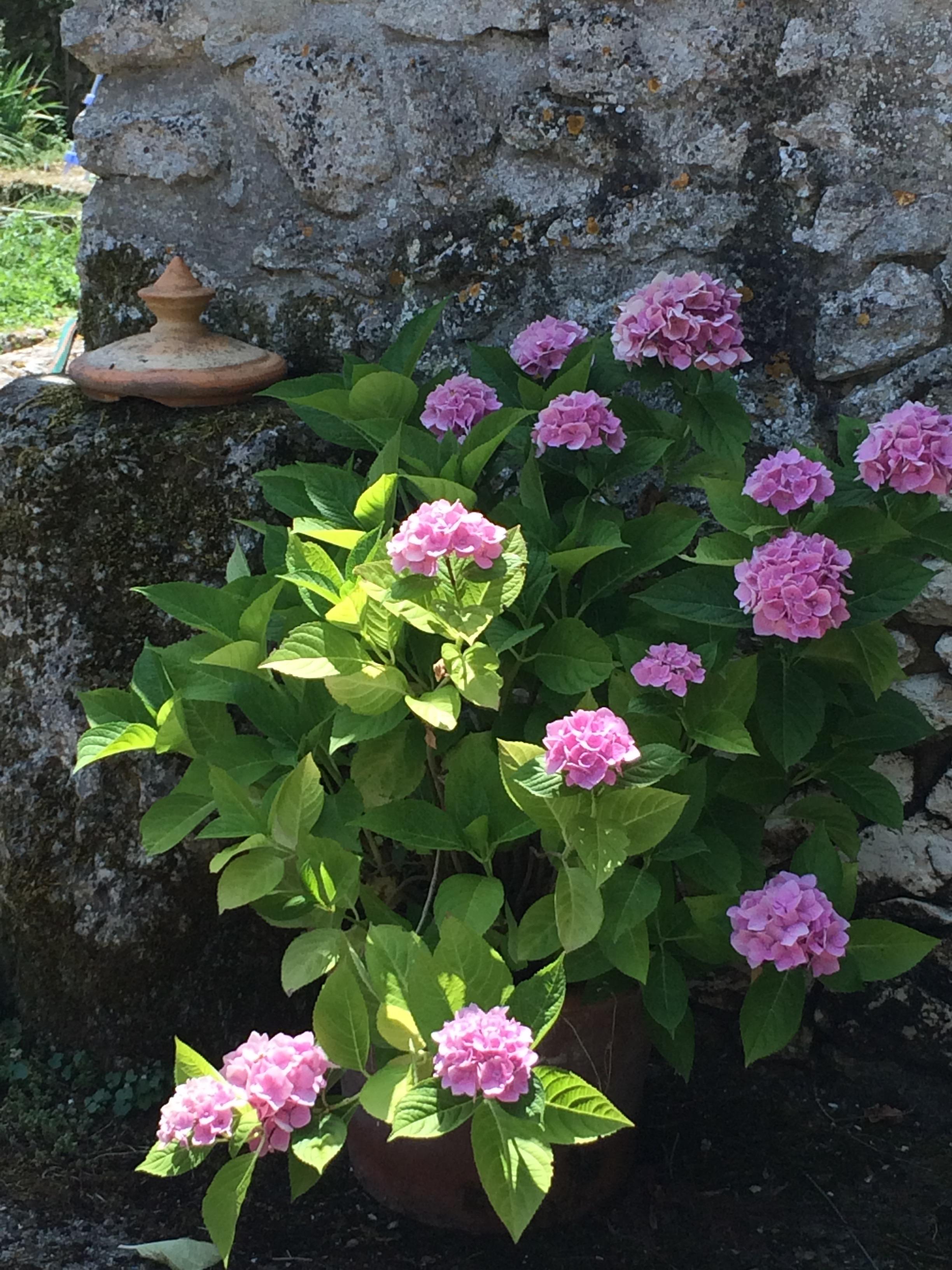 Flower garden holiday