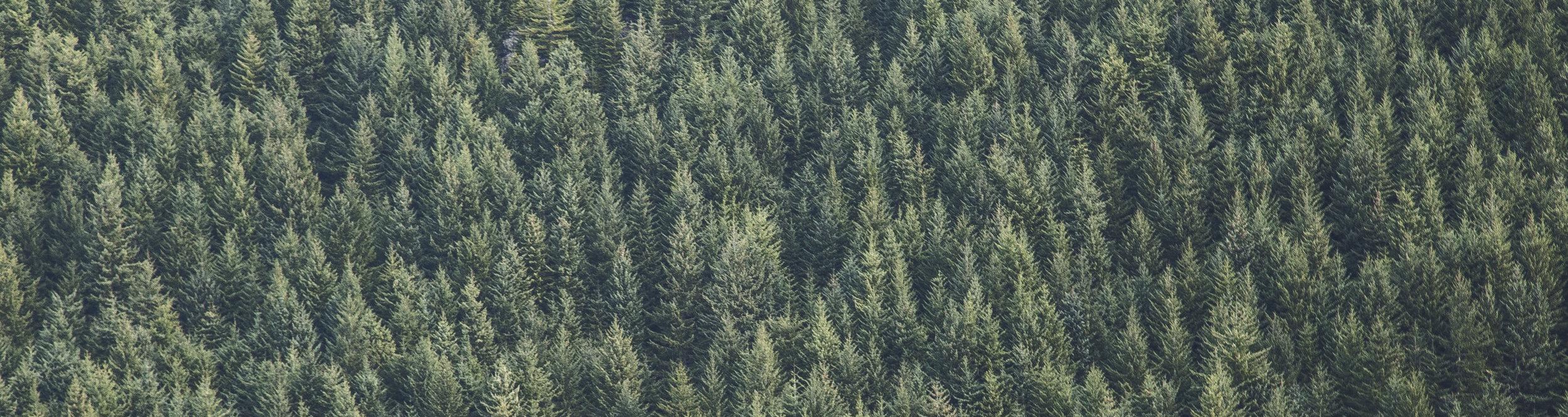woud.jpg