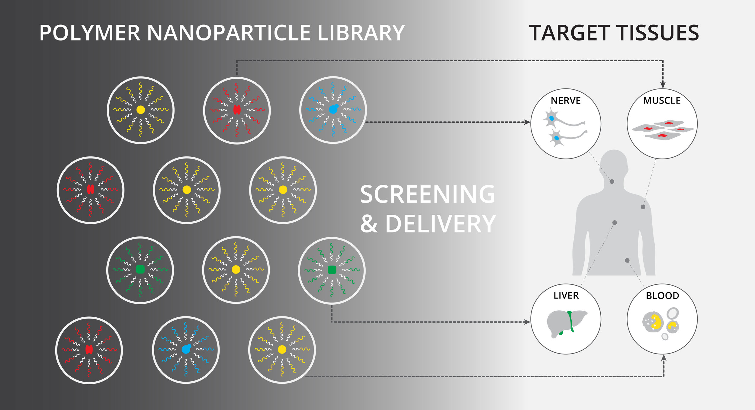 Nanoparticle_Screening_v2.jpg