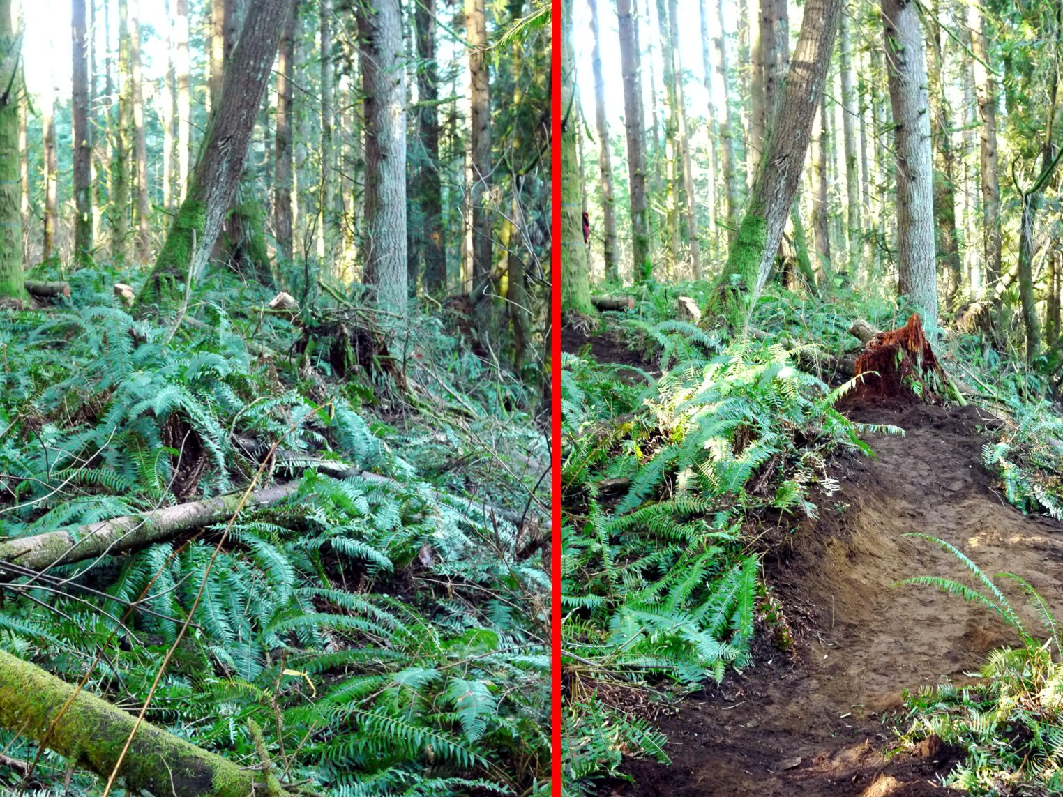 "Before and After work on the ""Trail with no Name"" at the Tree Farm."