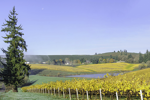 Willamette Valley Vineyards