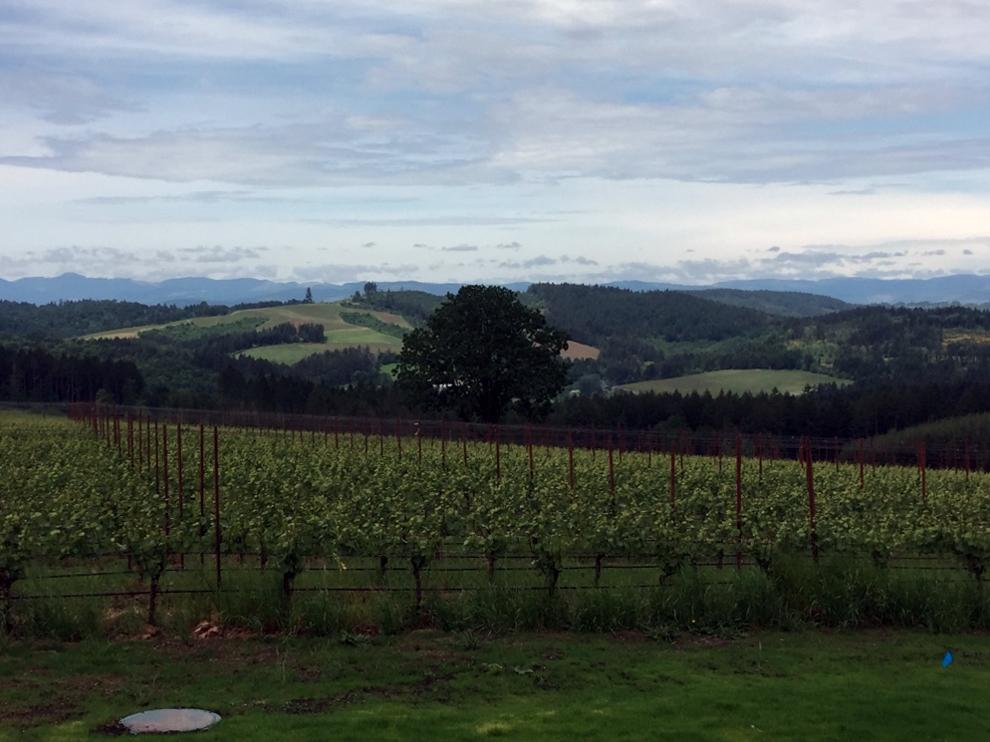 Sisu Vineyard from Ribbon Ridge.jpg