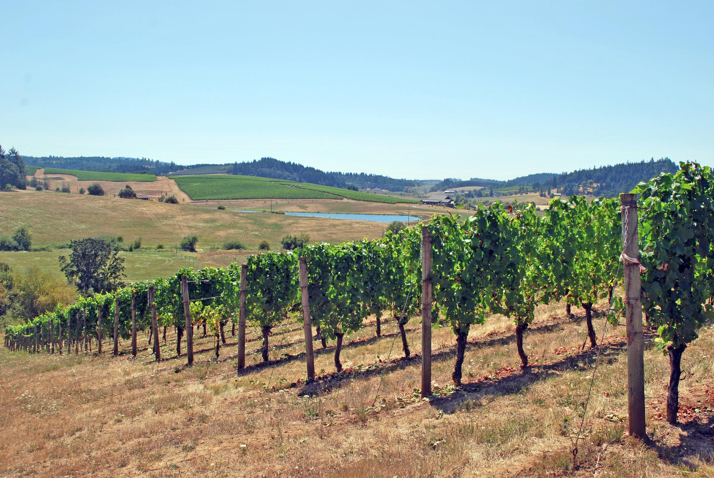 Deux Vert Vineyard 667 Block August 2015 089.jpg