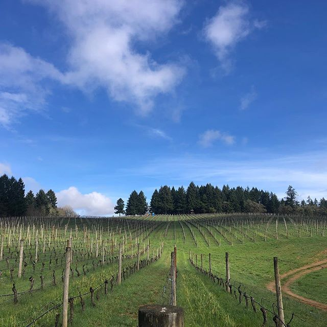 Out of the winery and into the vineyards - gorgeous day in Yamhill-Carlton