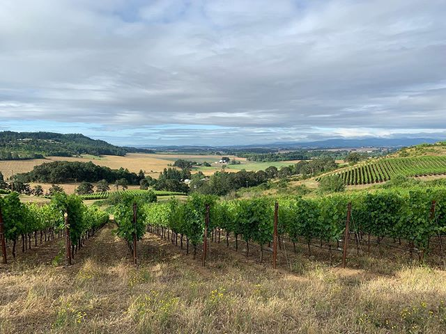Hey hey Chardonnay - this Eola-Amity Hills AVA vineyard is looking mighty fine for the 2019 vintage.  Stoked about this new-to-us fruit.