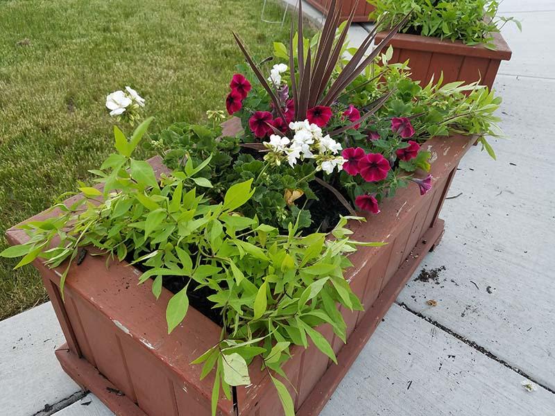 Planting-Event-1.jpg