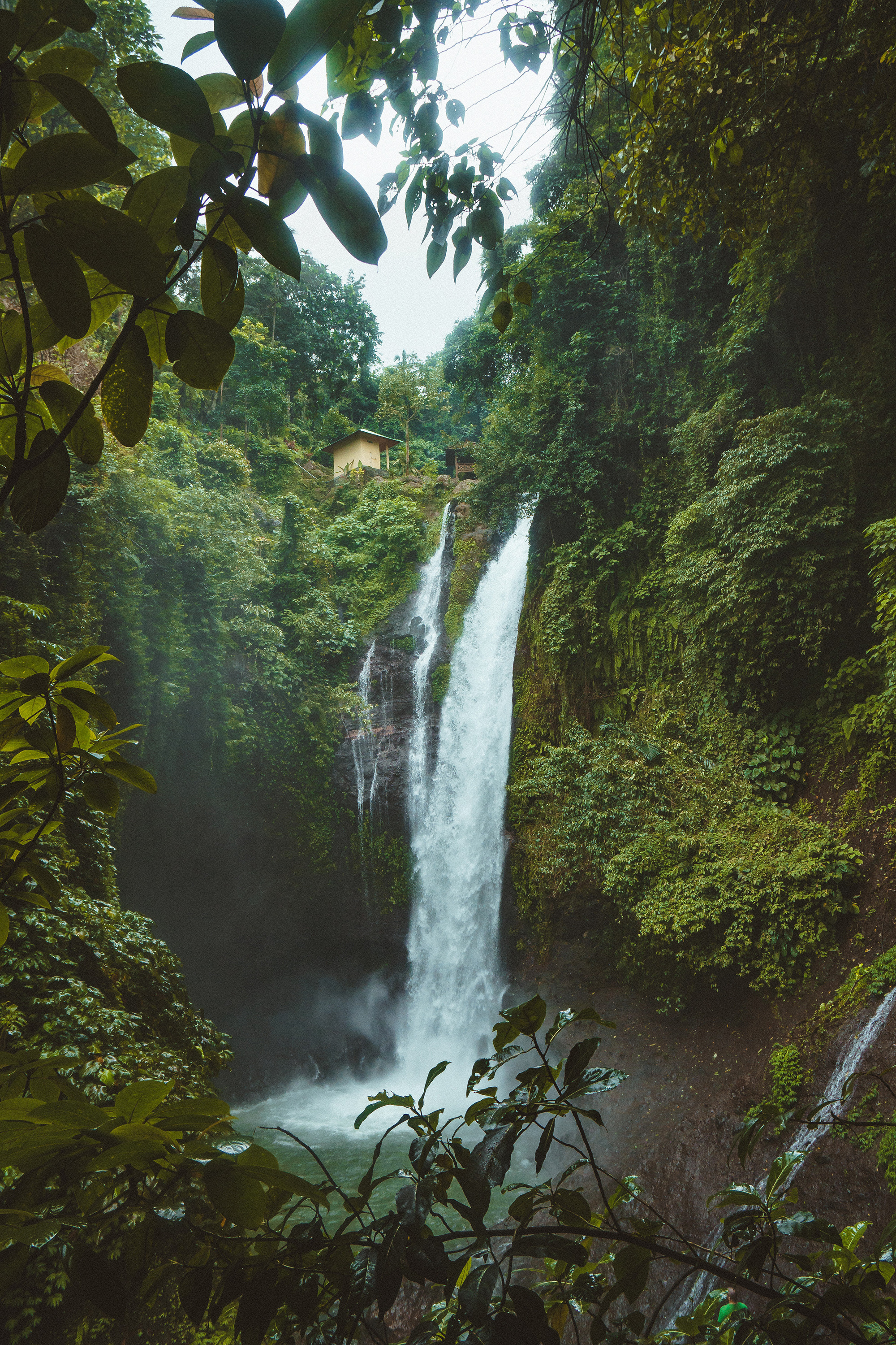 Deforestation and climate change are threatening the functionality of our magnificent rainforests