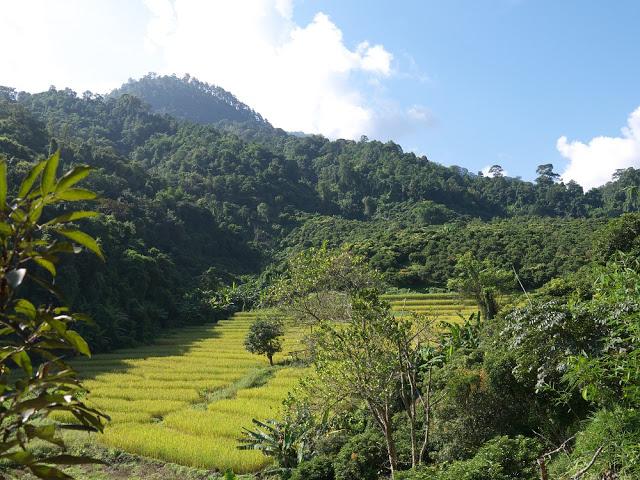 Doi Pui Naional Park.jpg