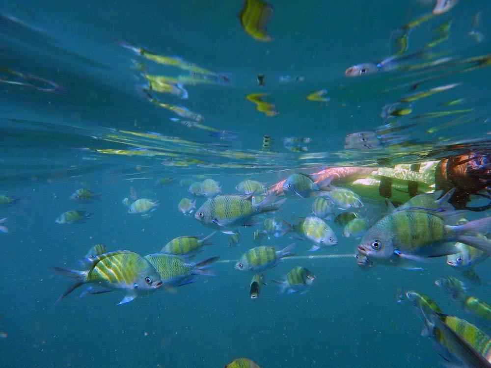 fiskar2.jpg