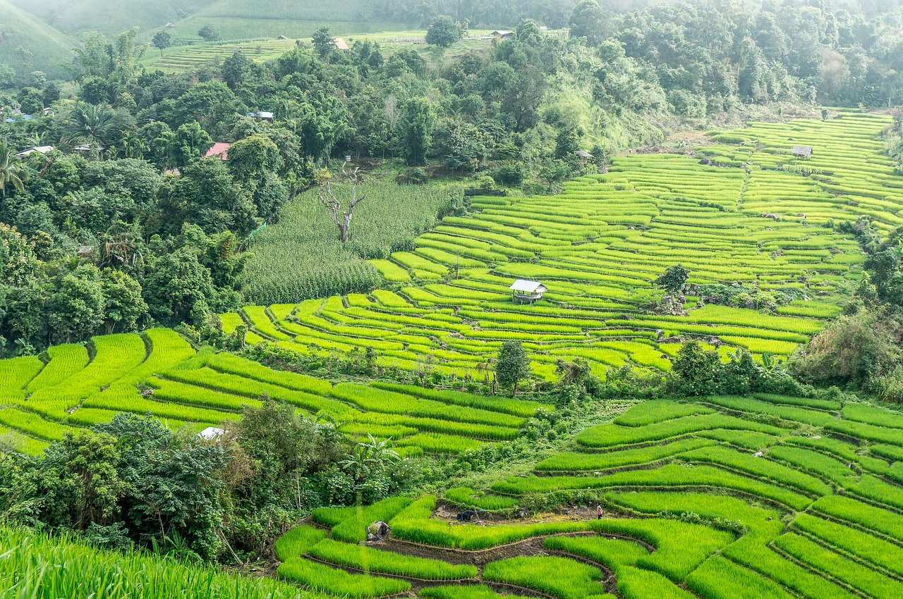 rice-terraces-2224264_1280.jpg