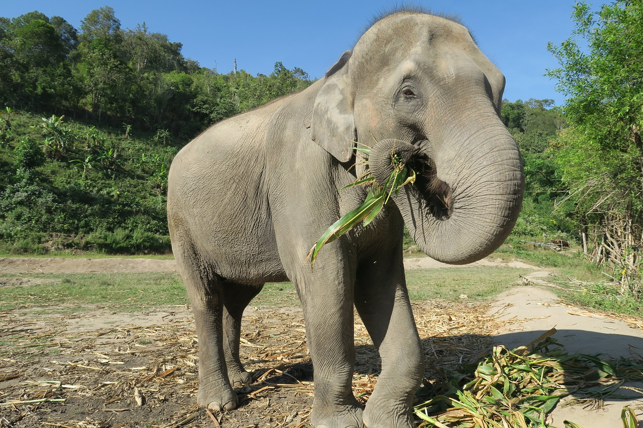 elephant-1500095_1280.jpg