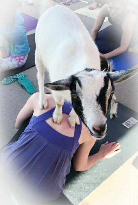 Happy Goat Yoga 3.jpg