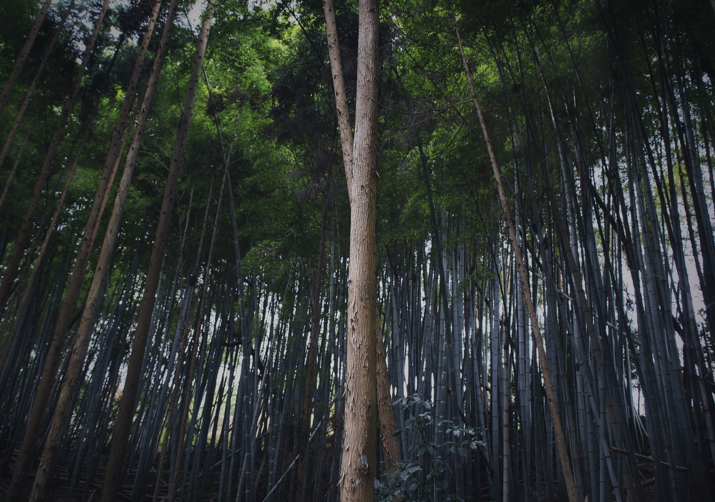The depth of bamboo forests, Kyoto, 2017. Shot on Canon 6D with 24-70mm