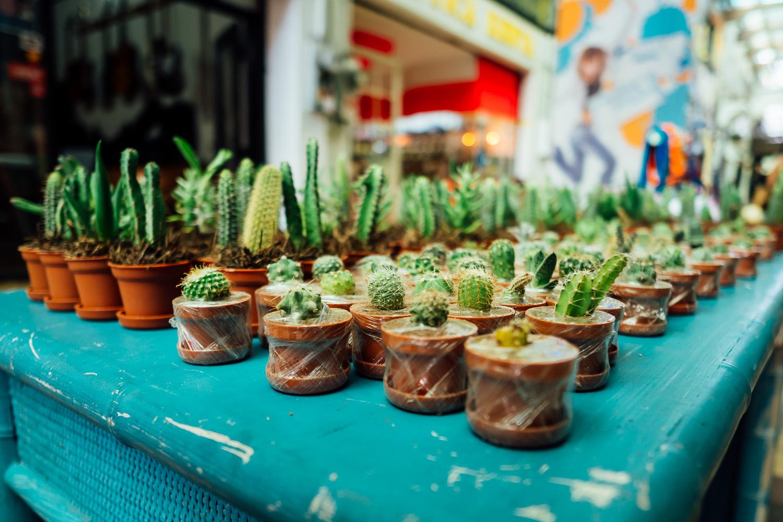 Tijuana-Mexico-Downtown-Cactus-Small-Art.jpg