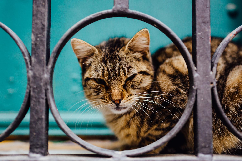 Cat-Portrait-Green-Durazo-Photography-Project-Travel-Street.jpg