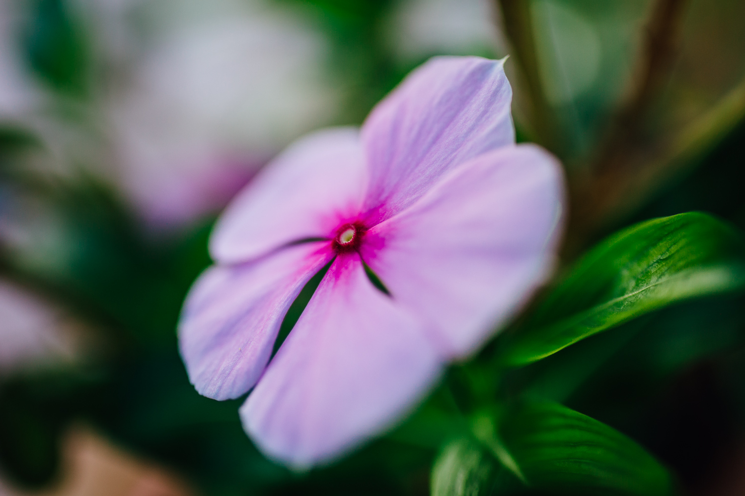 Macro-FLower-Pink-Durazo-Photography-Project-Travel.jpg