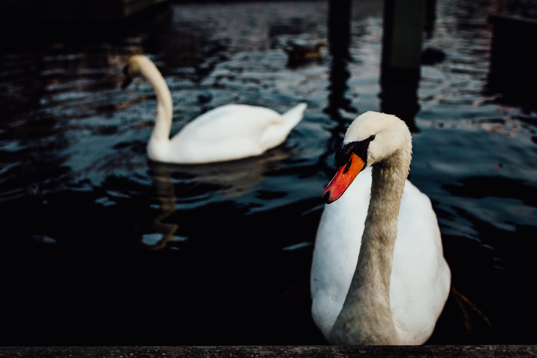 Goose-Animal-Bird-Orange-Durazo-Photography-Project-Travel.jpg
