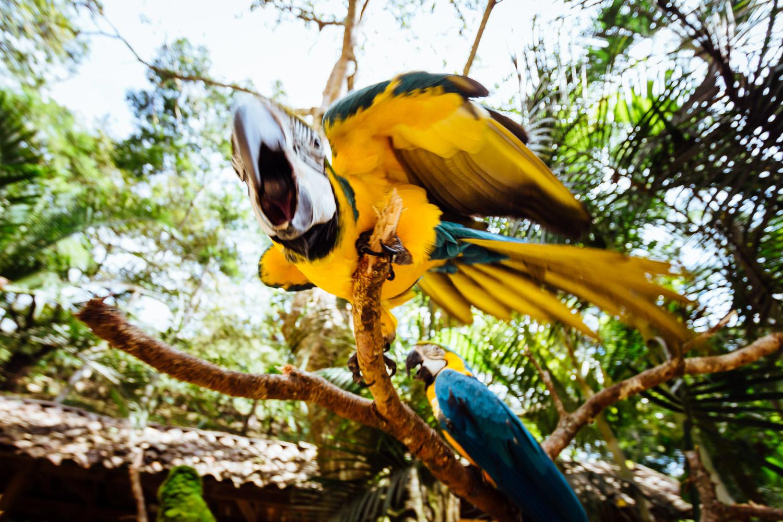 Bird-Macaw-Jungle-Yellow-Honduras-CentralAmerica-Durazo-Photography.jpg