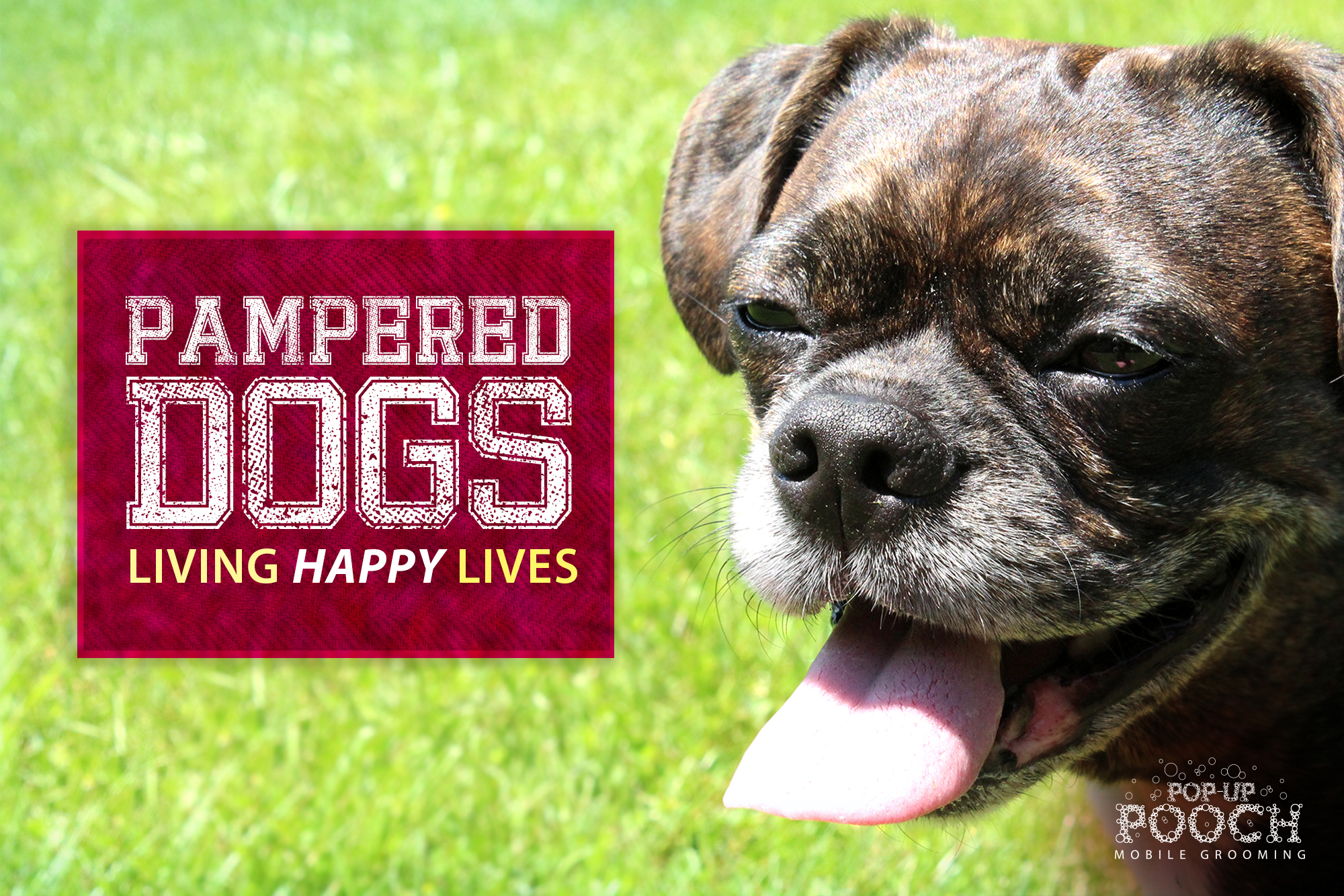 happy_dog_campaign1.jpg