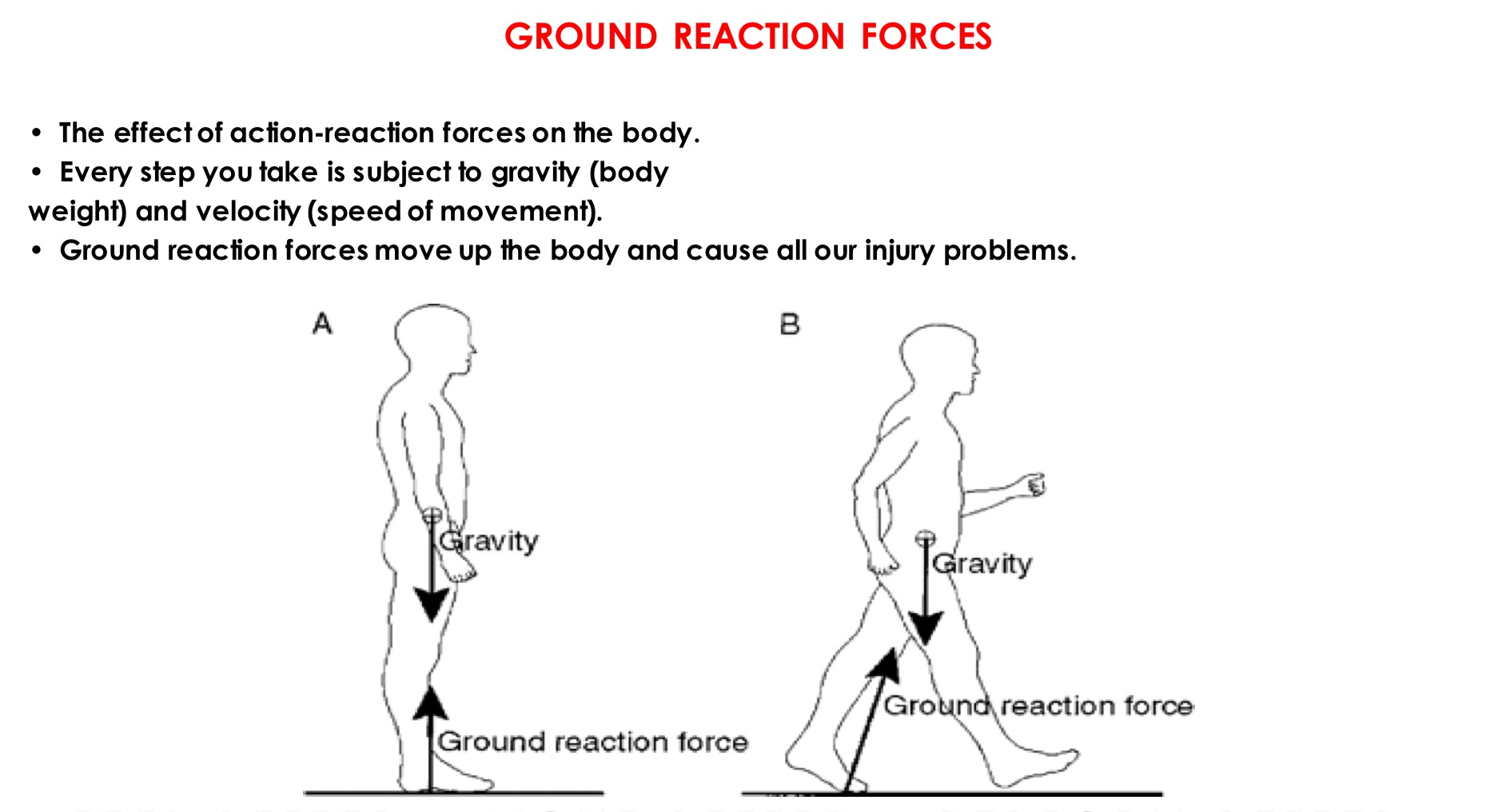 Ground_Reaction_Forces.jpg
