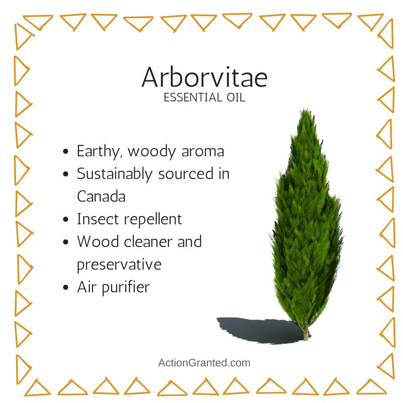 Arborvitae.png